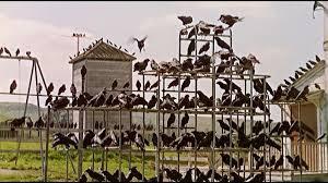 birds on climbing frame